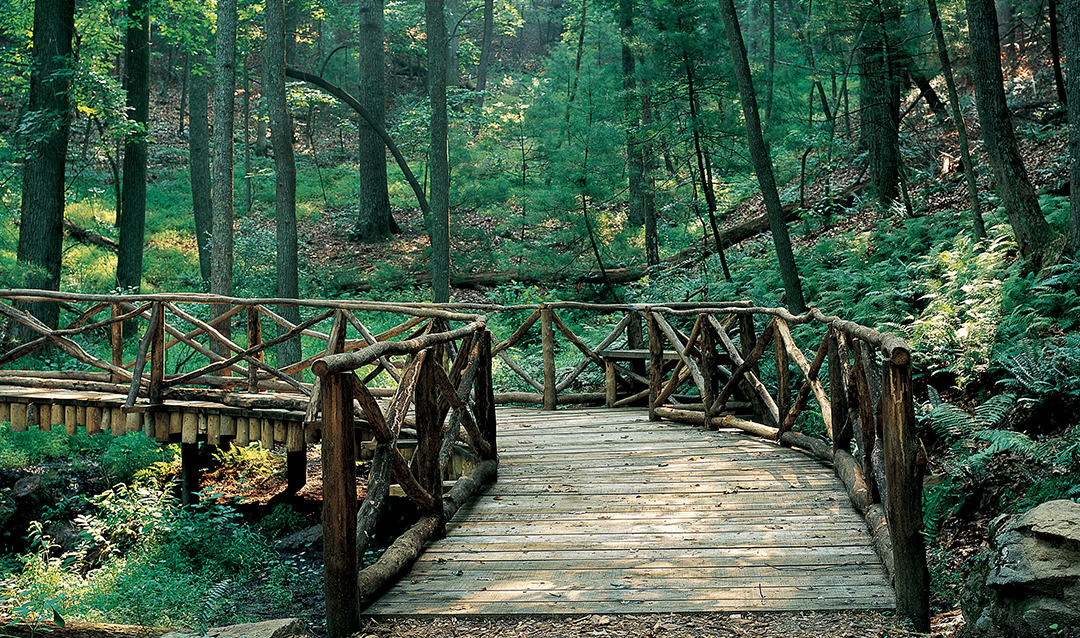On Biltmore's Westover trails, a bridge in the woods